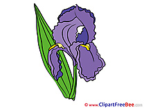 Iris free Cliparts Flowers