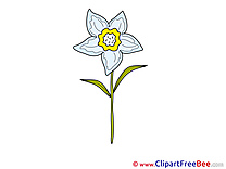 Narcissus Flowers free Images download