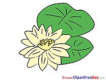 Nenuphar free Illustration Flowers