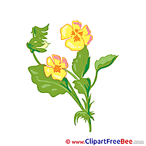 Pansy Flowers download Illustration