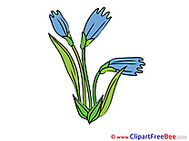 Pics Cornflower Flowers free Image