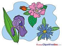 Pics Flowers free Image
