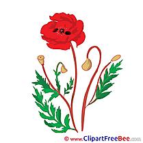 Poppy Pics Flowers free Image