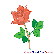 Rose Cliparts Flowers for free