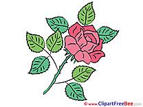 Rose download Flowers Illustrations