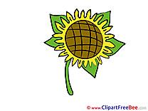 Sunflower Flowers Illustrations for free
