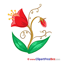 Tulip Clipart Flowers free Images