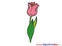 Tulip Pics Flowers Illustration