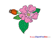 Violet Cliparts Flowers for free