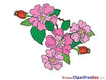 Wild Rose printable Illustrations Flowers