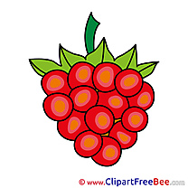 Berry Grapes Pics download Illustration