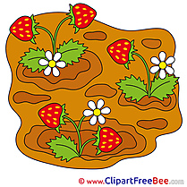 Garden Strawberry free Illustration download