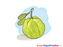 Guava free Illustration download