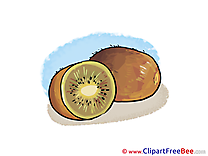 Kiwi Pics download Illustration