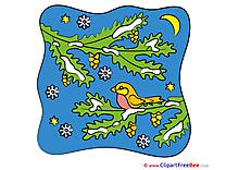 Bird Night Pics New Year free Image