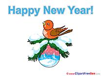 Bullfinch Ball Pics New Year Illustration