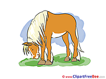 Download Horse Illustrations