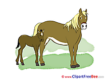 Foal download Clipart Horse Cliparts