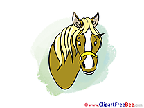 Head Pics Horse free Image