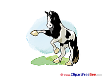 On hind Legs Horse free Images download