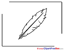 Feather Clipart free Illustrations