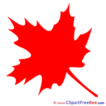 Maple Leaf Pics download Illustration