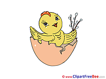 Chicken Egg Shell Pics free download Image