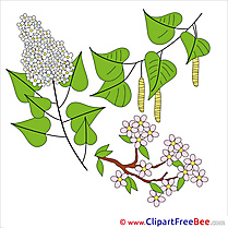 Lilac Branch free printable Cliparts and Images