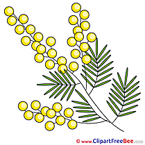 Mimosa Clip Art download for free