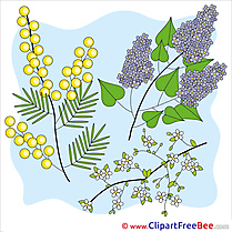 Mimosa Lilac Clipart free Image download