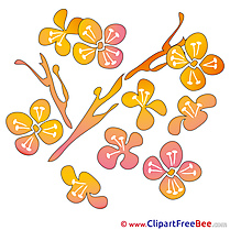 Petals Flowers printable Illustrations for free