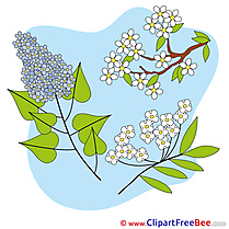 Spring Flowers Pics free Illustration