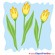 Tulips Clip Art download for free