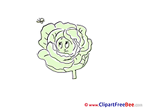 Cabbage Butterfly Cliparts printable for free
