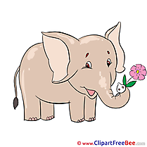 Elephant Flower Images download free Cliparts