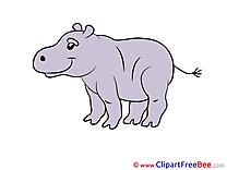 Hippo Pics free download Image