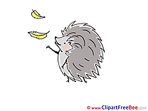 Leaves Hedgehog download Clip Art for free