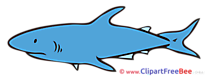 Shark free Cliparts for download